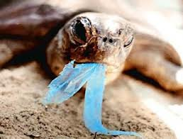 Turtle that tried to eat plastic trash
