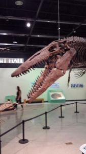Fossil at Burpee Museum of Natural History