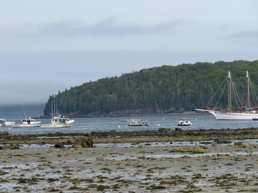 Bar Harbor as seen from the sand bar leading to Bar Island