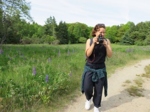 Stephanie photographing a field of lupine on Bar Island